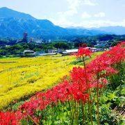 【悲報】埼玉とかいう東と西で内戦起こしてる県wwwww(画像あり)